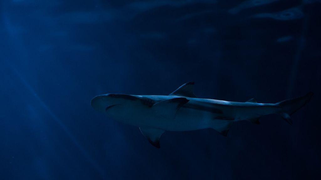El gran peligro de las playas de Florida: un tiburón muerde a una niña de 9 años