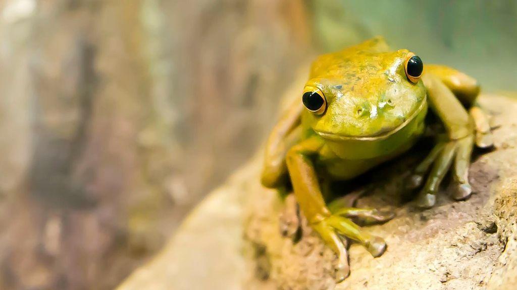 frog-2211972_960_720
