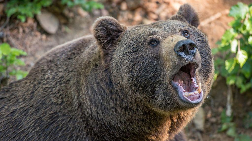bear-3405945_960_720