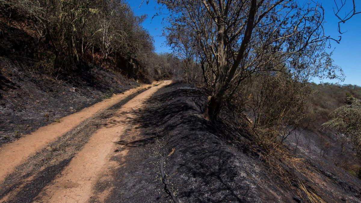 Gavilanes, cernícalos o currucas: todas las especies en peligro por el gran incendio en Gran Canaria