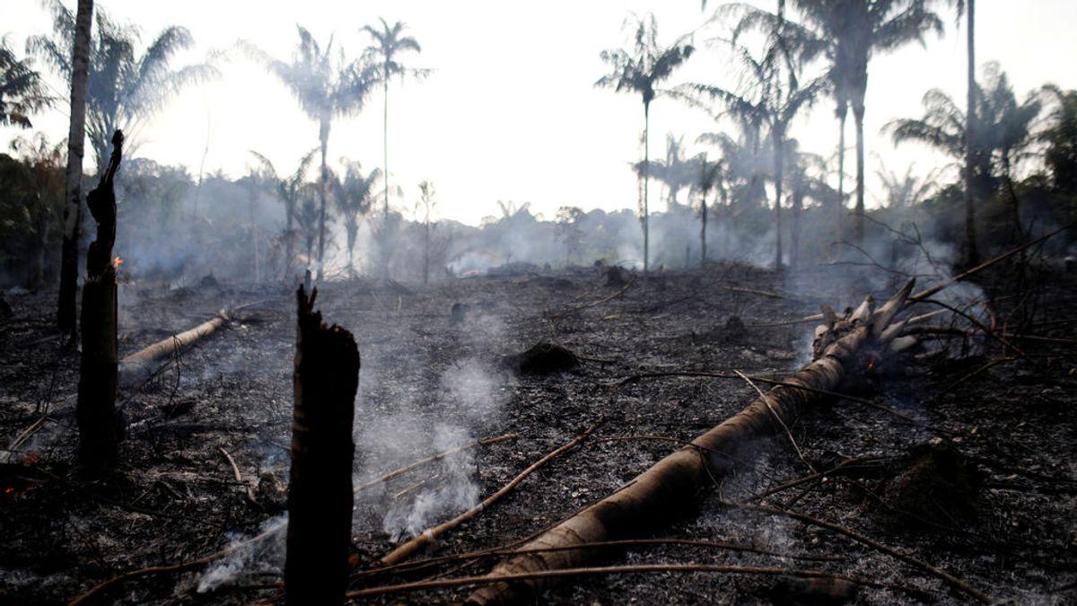El Amazonas, en jaque por los incendios: qué puedes hacer tú para salvarlo