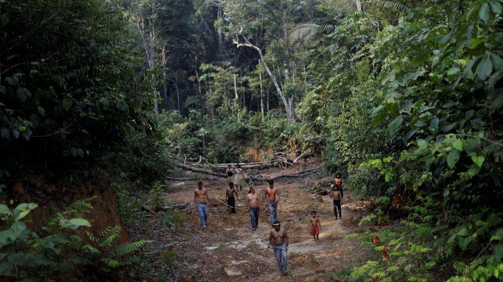 Las consecuencias de los incendios del Amazonas: un millón de indígenas y 6000 especies en peligro inminente