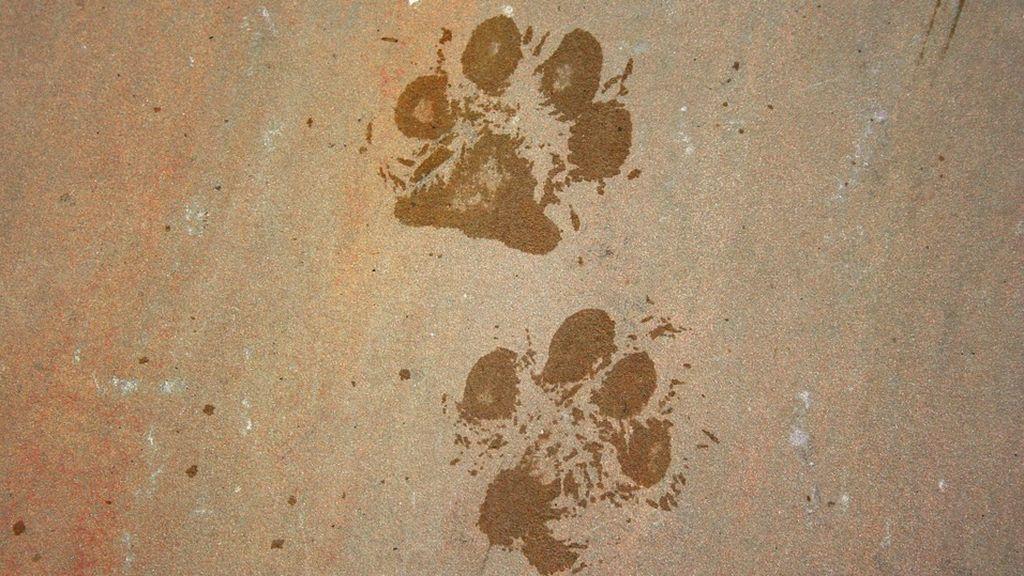 Muere un perro al ser lanzado por su dueño desde el piso 19 de un edificio en Cartagena, Colombia