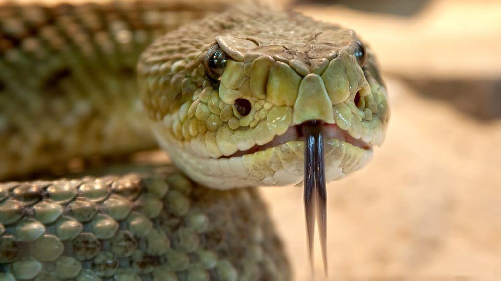 La alerta de movimiento de una cámara de vigilancia sorprendió a una mujer: tenía una serpiente enorme en su puerta