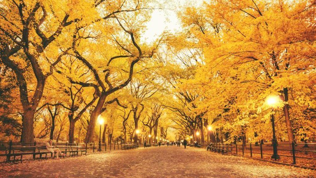 Test visual: este otoño, según el árbol que elijas
