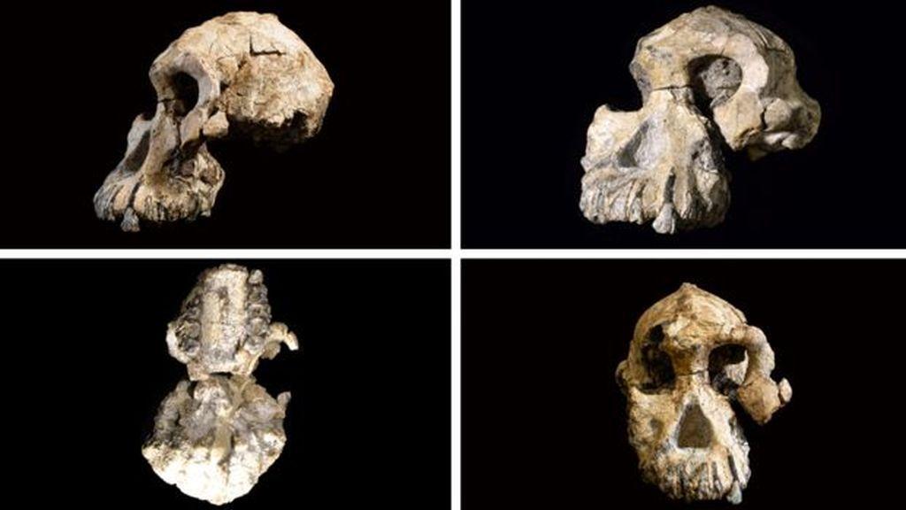 Un nuevo hallazgo fósil en Etiopía cuestiona la anagénesis humana