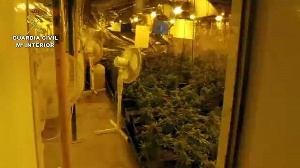 Intervenidas 2.800 plantas de marihuana en una operación con 23 detenidos en Málaga, Córdoba y Sevilla