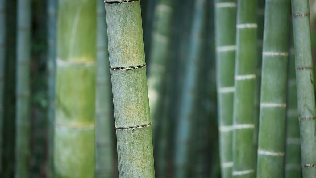 Un paso más en la lucha contra el plástico: crean botellas biodegradables con bambú