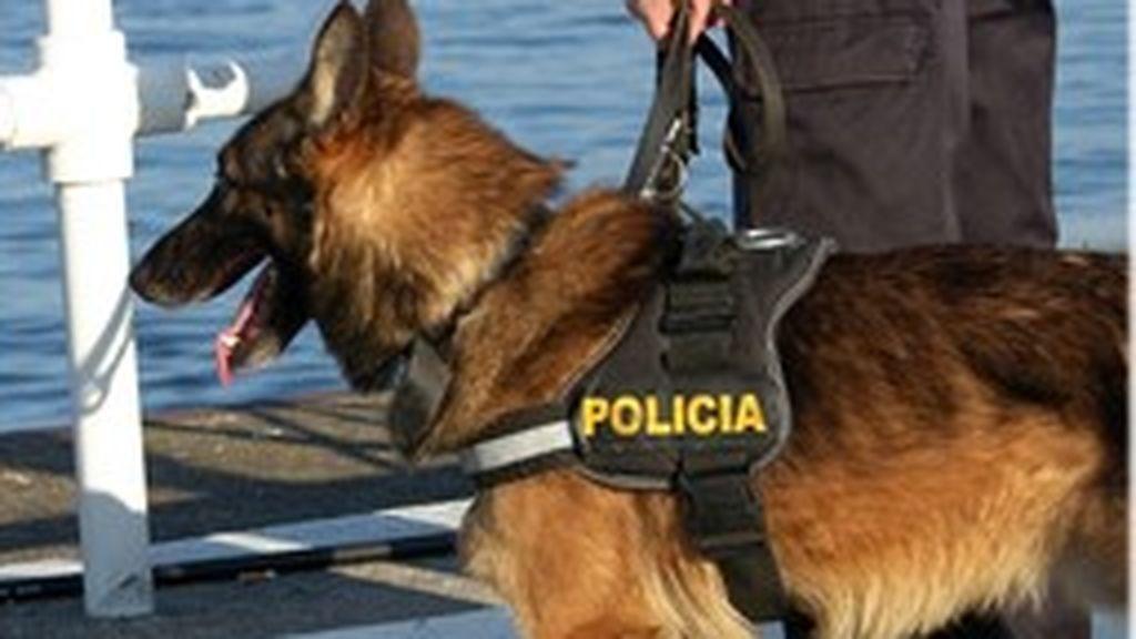 Buscan con perros y drones a un octogenario desaparecido en Oleiros, Galicia