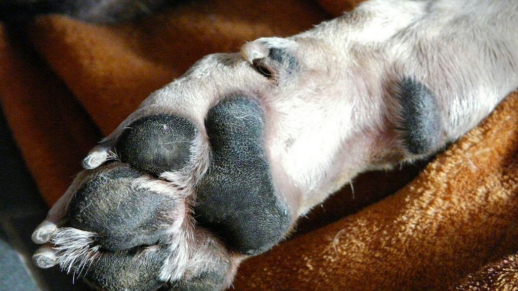 Absuelto el dueño de varios perros que murieron asfixiados de calor en su coche a 43 grados