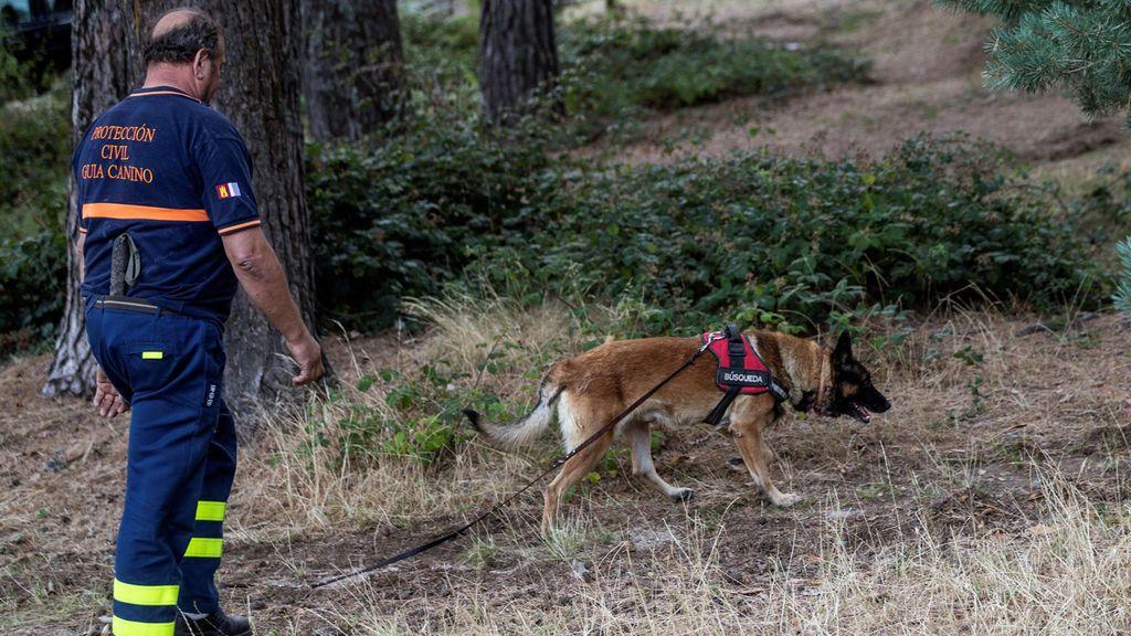 Así trabajan los equipos caninos en la búsqueda de Blanca Fernández Ochoa y otros desaparecidos