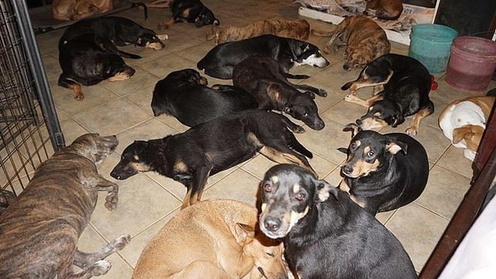 Foto publicada en Facebook por Chella Philips de los perros que rescató antes de que llegase 'Dorian'
