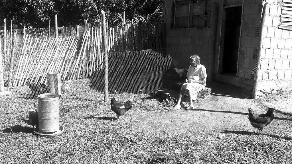 Una granjera australiana de 76 años muere desangrada por los picotazos de un gallo