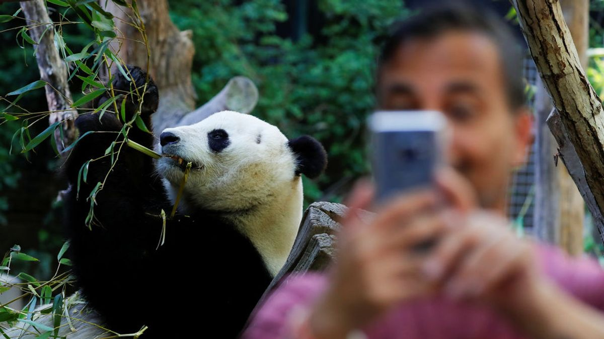 Selfis perjudiciales para nuestra biodiversidad
