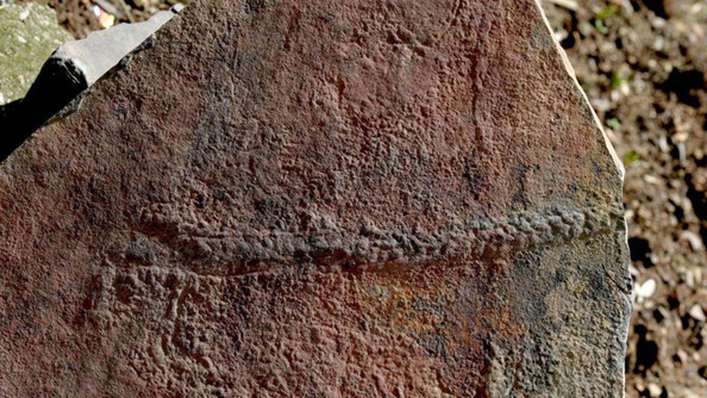 El descubrimiento de un fósil animal que reptaba hace 550 millones de años da un giro a las teorías científicas