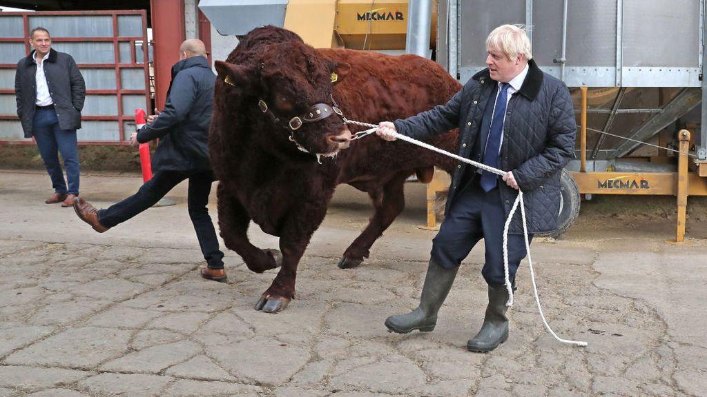 Boris Johnson trata de domar a un bisonte en una granja de Escocia