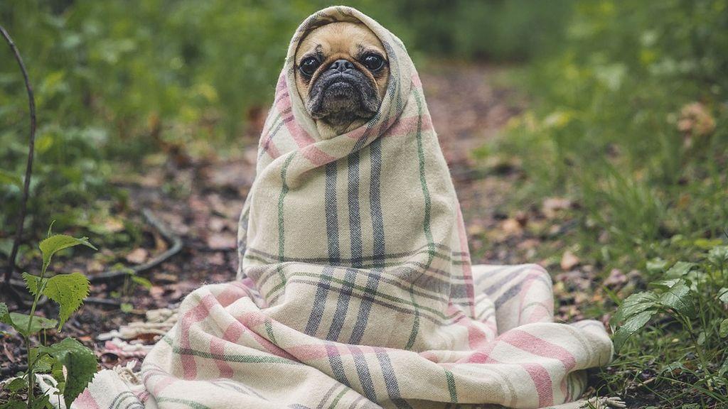 La cría selectiva de perros por parte del ser humano ha hecho que se produzcan cambios en sus cerebros