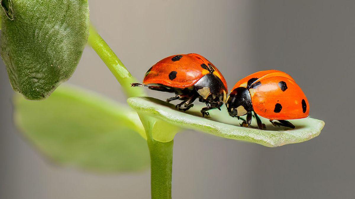 Alemania piensa en grande: 100 millones de euros para proteger sus insectos