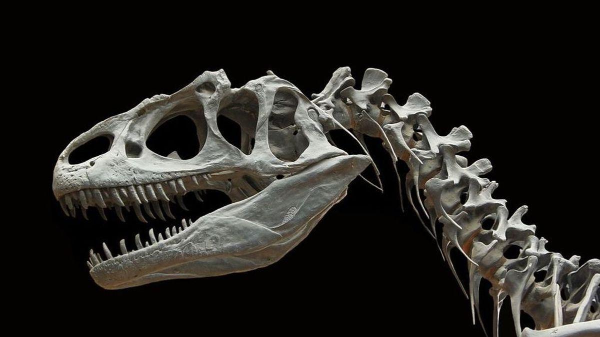 La extinción de los dinosaurios: una investigación reconstruye el momento en el que cayó el meteorito