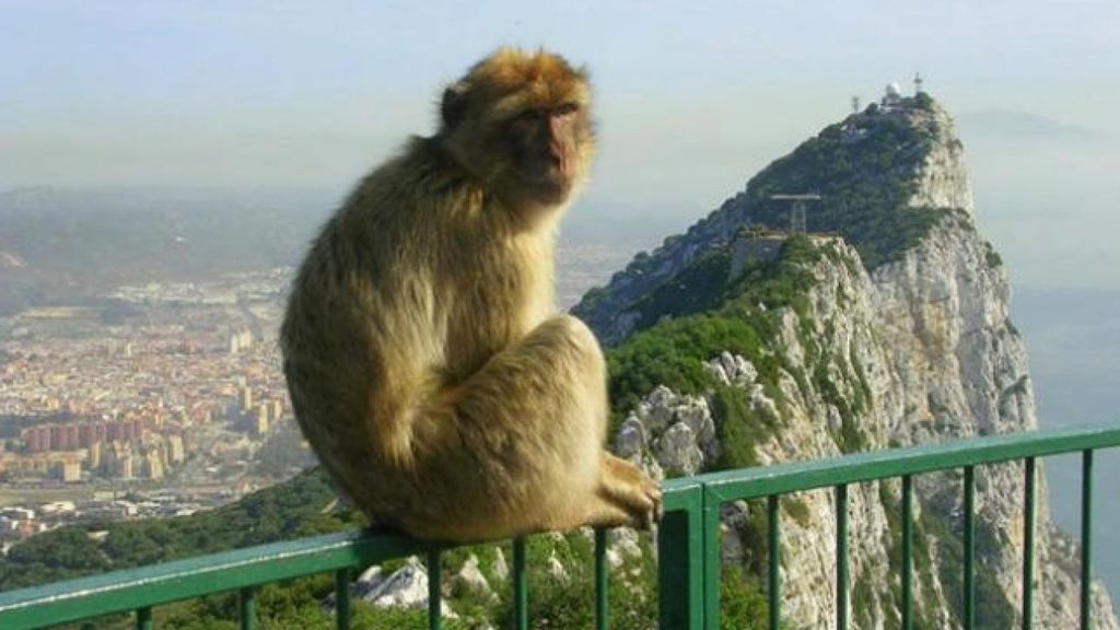 Mono Gibraltar
