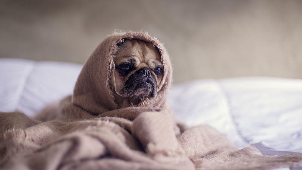 Dormir con tu perro puede hacerte sentir más seguro y que descanses mejor, según un estudio