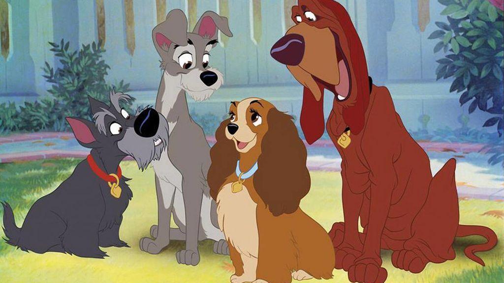 Test canino: qué raza de perro eres según tu personalidad