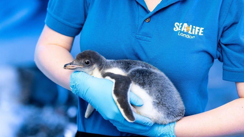 Pingüino sin género