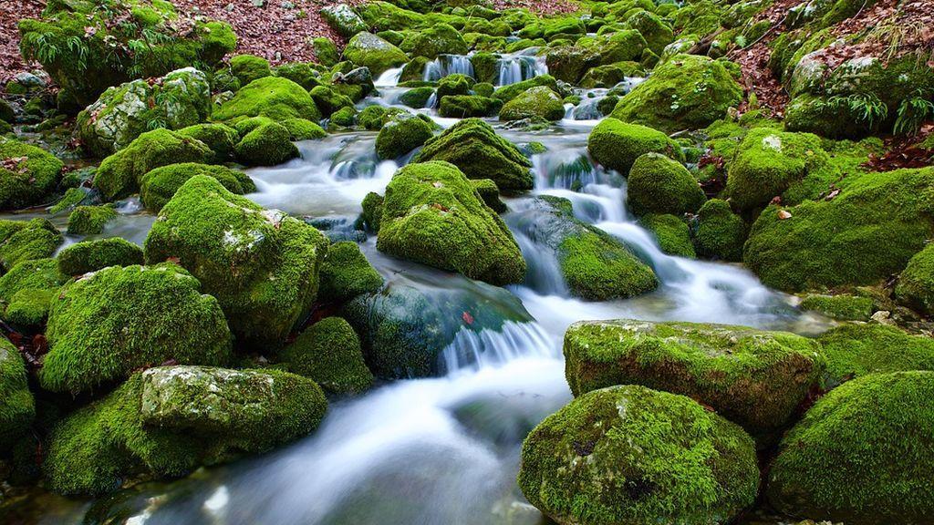musgo rocas