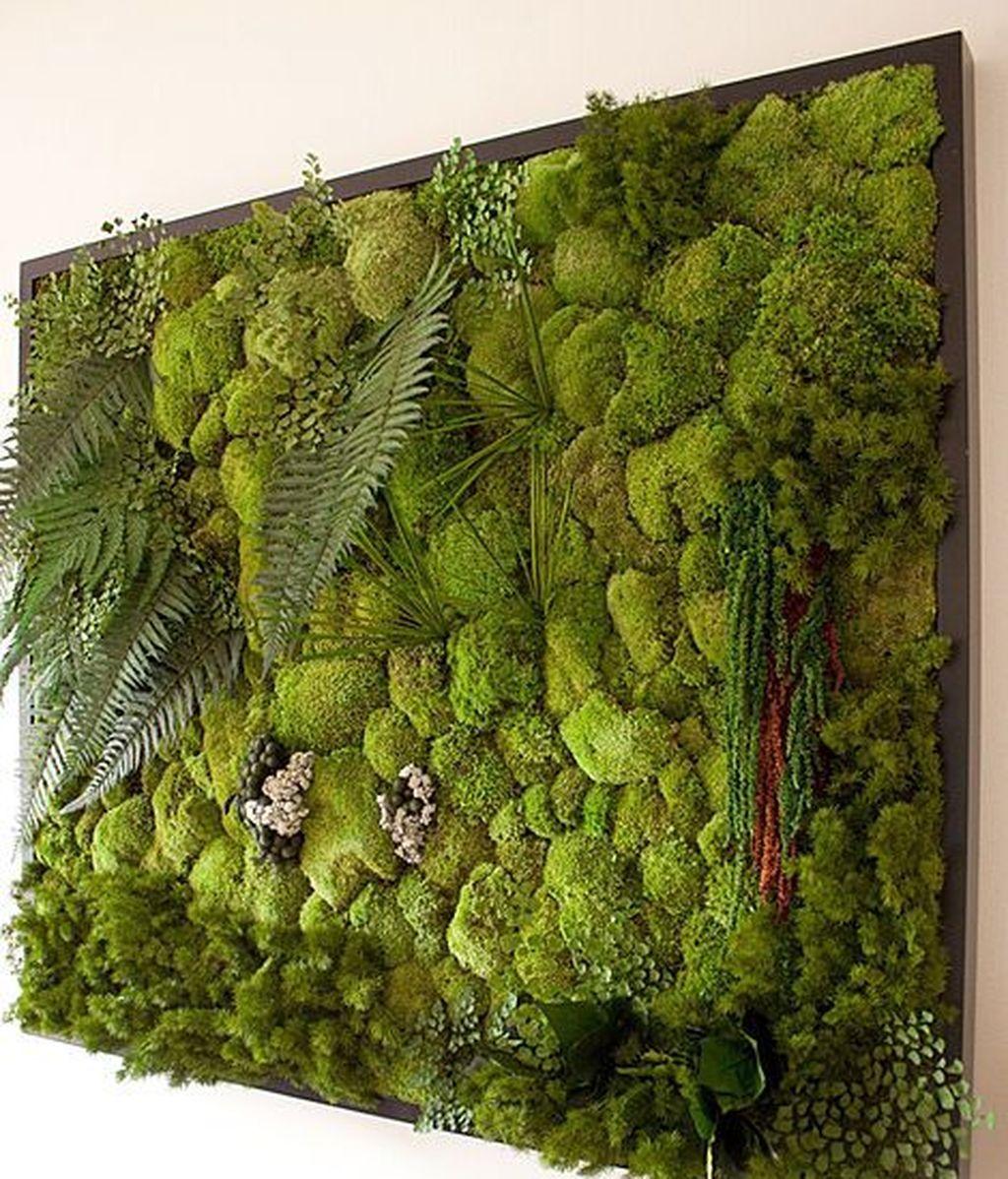 jardines verticales musgo