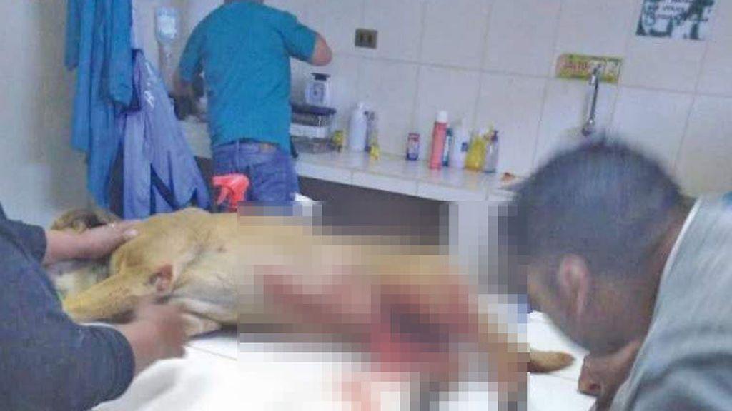 Una joven de 18 años corta el pene con un machete a un perro mestizo por aparearse con su perra de raza