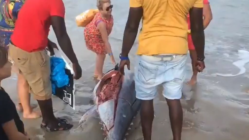 Salud advierte del riesgo sanitario de consumir atunes hallados en la costa