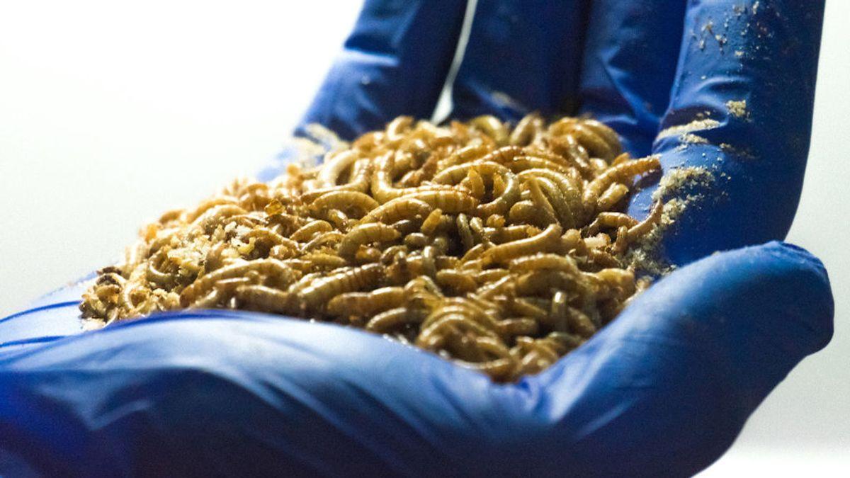 La comida del futuro: insectos, algas y pan impreso en 3D