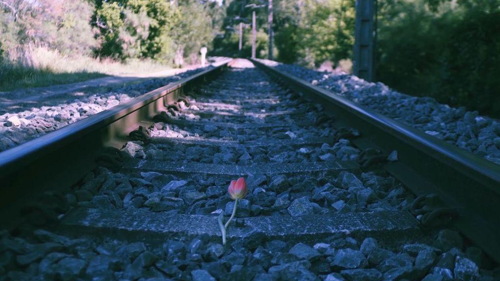 La danza de los tulipanes (Booktrailer)