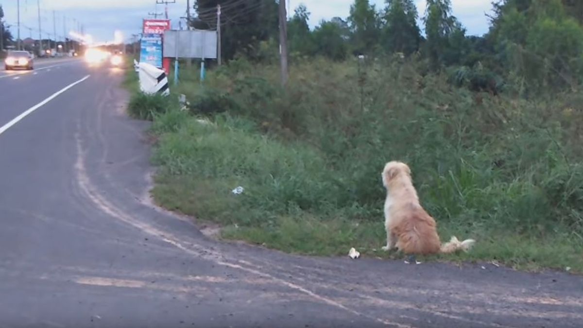 La tierna historia del perro BonBon: se reencuentra con sus dueños tras esperar durante 4 años donde se perdió