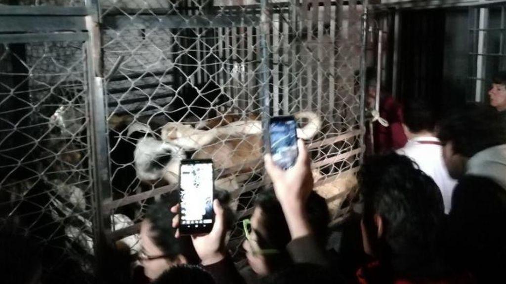Detienen a una mujer por robar animales domésticos, pedir dinero por ellos y vender su carne en México