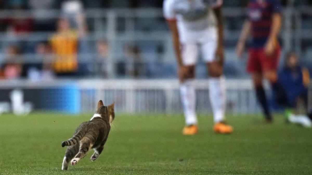 El Barça pide máxima precaución con los gatos callejeros en las obras de reforma de su estadio