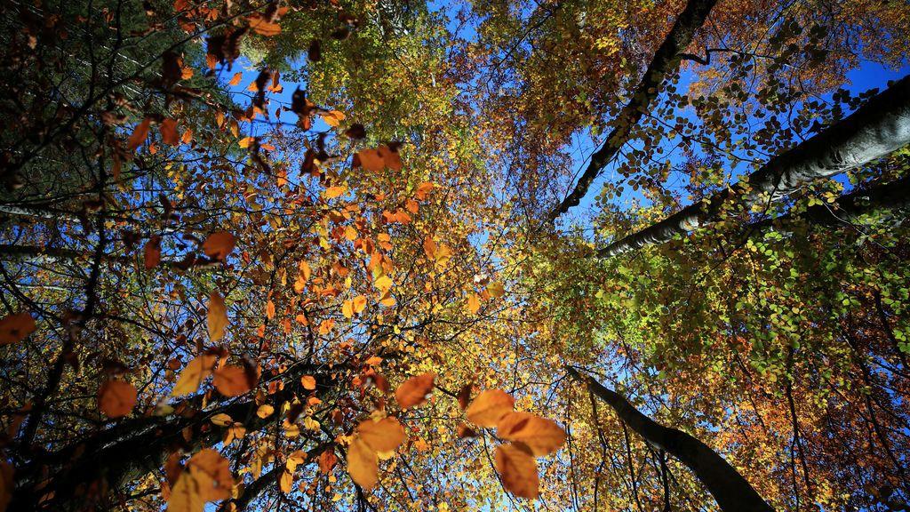 La Aemet ha hablado: qué tiempo va a hacer en otoño