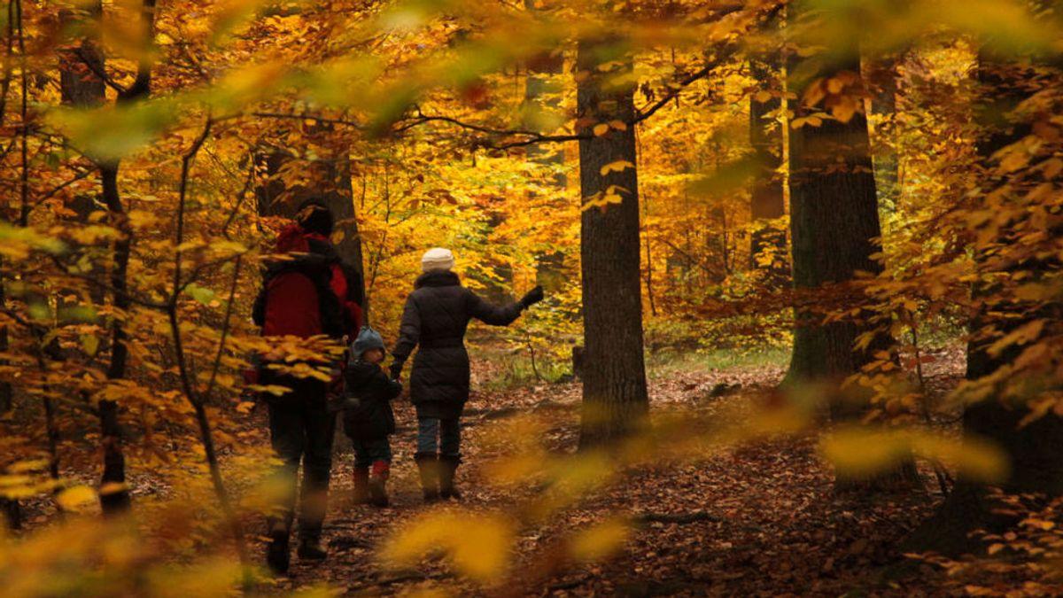 En la imagen, una madre y su hijo caminan en un bosque de Viena