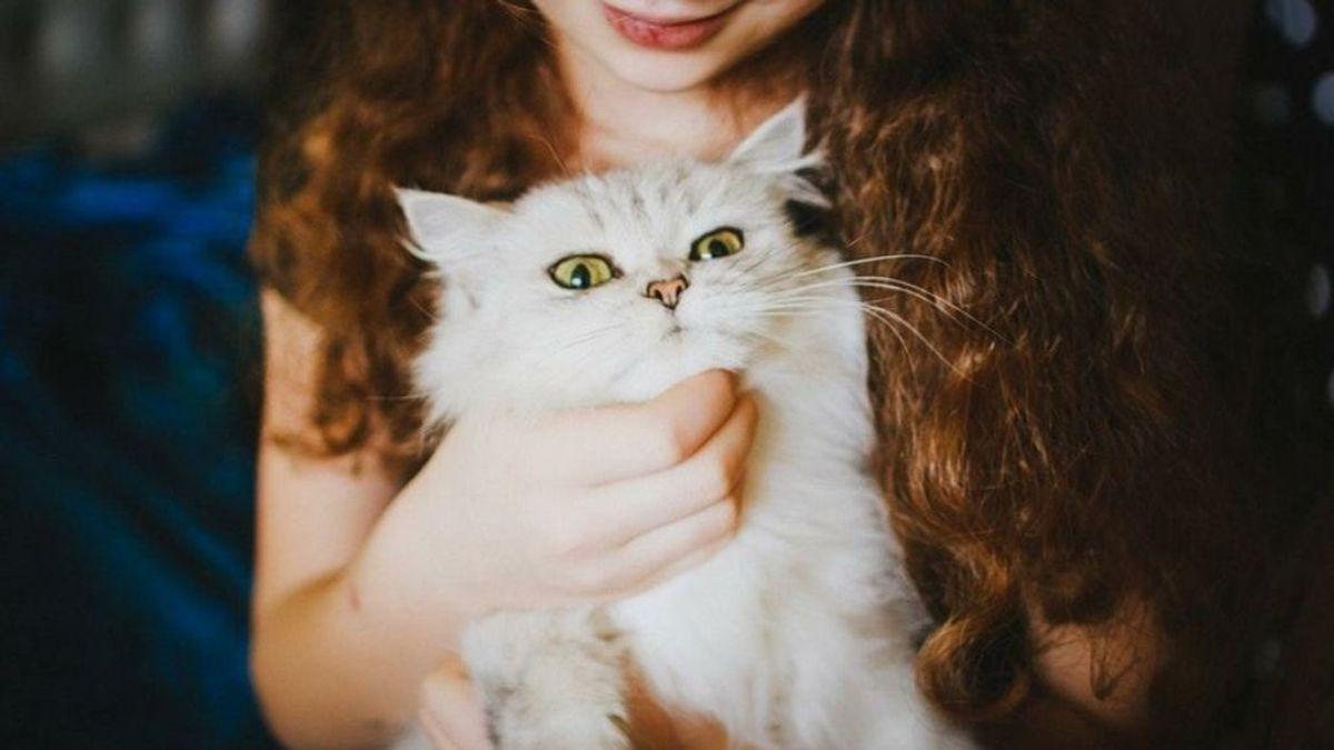 Conexión gatos dueños