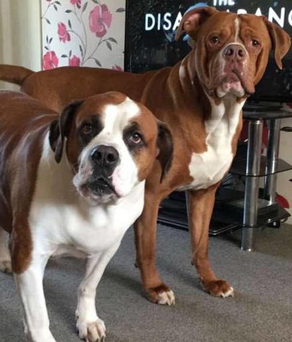 Una mujer fallece tras ser atacada por sus propios perros
