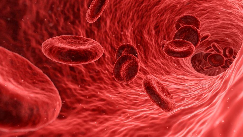 Descubre todo lo que debes saber sobre tu grupo sanguíneo y RH: qué es, qué determina y quién puede donar
