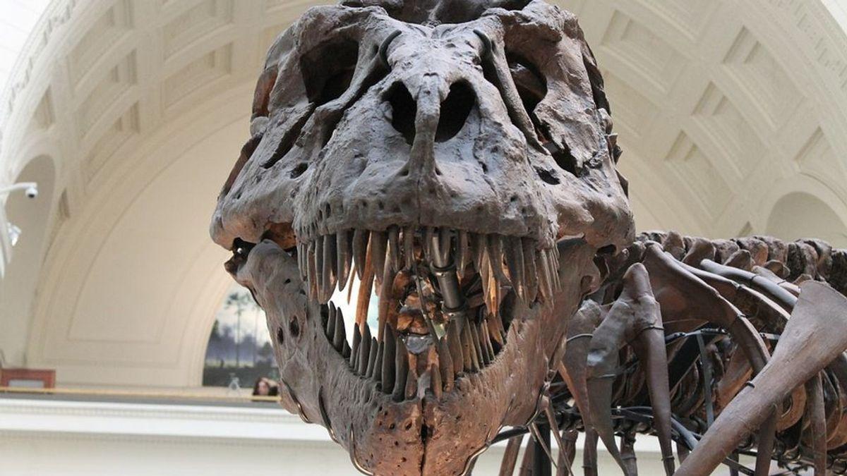La mordida rompehuesos del T.Rex se debía a un cráneo rígido y no sólido como se creaía