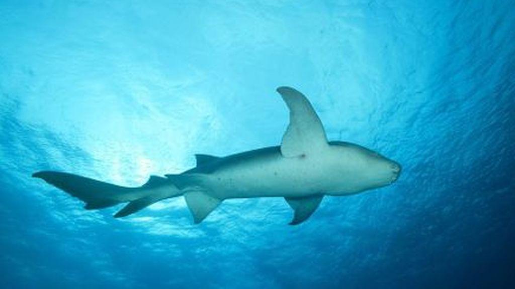 Un surfista de 13 años se recupera del ataque de un tiburón que le dejó 19 puntos