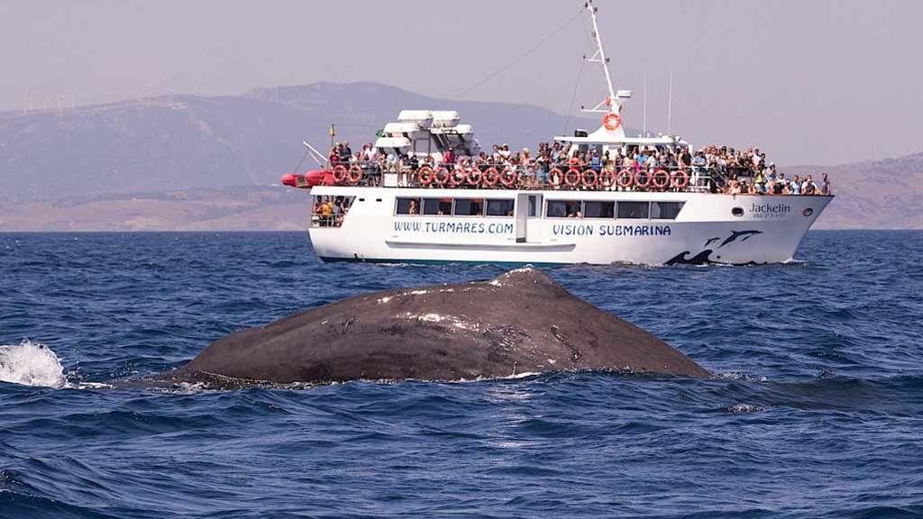 Cachalotes frente al barco de avistamiento este mes