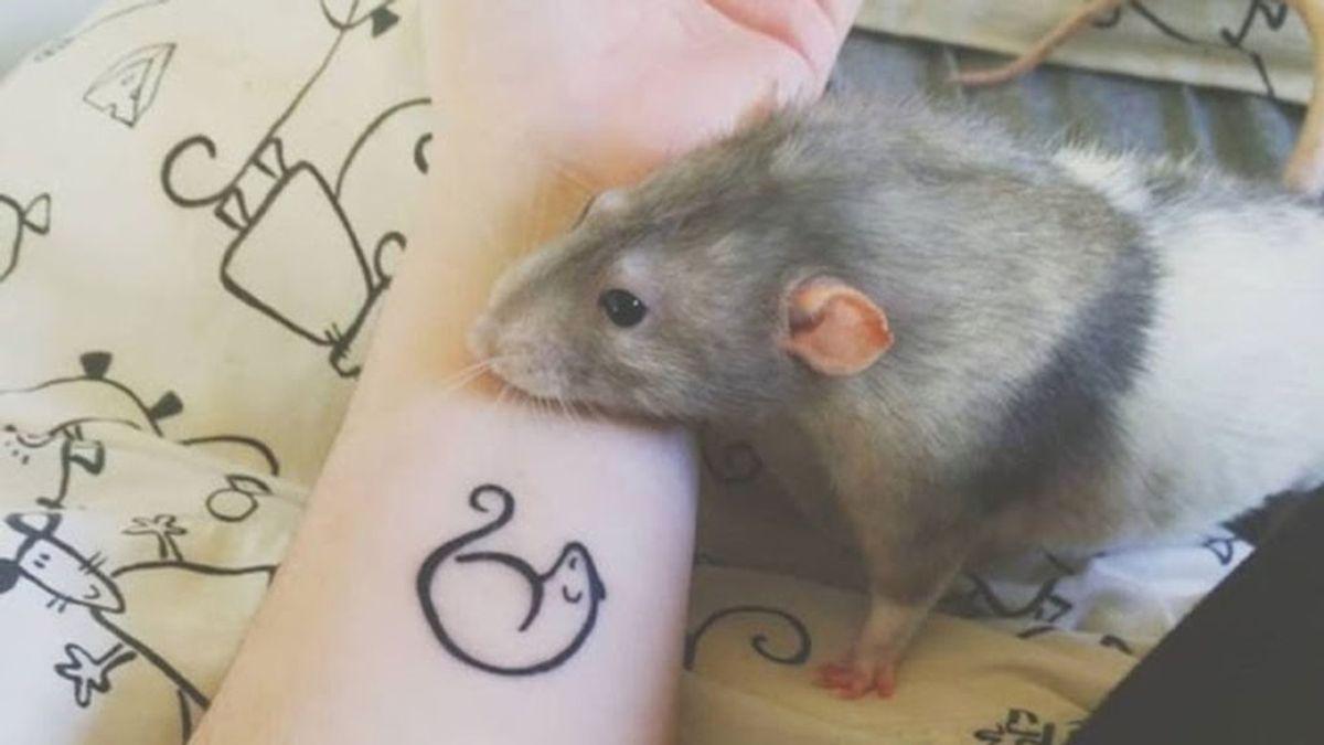 Es una rata y es artista: una estudiante de arte entrena a su mascota para que pinte cuadros