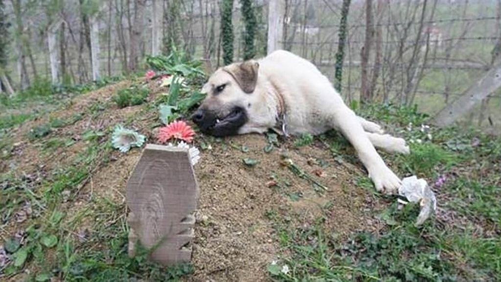 La emotiva historia de Zozo, un perro que visita a diario la tumba de su dueño desde que murió hace 5 años