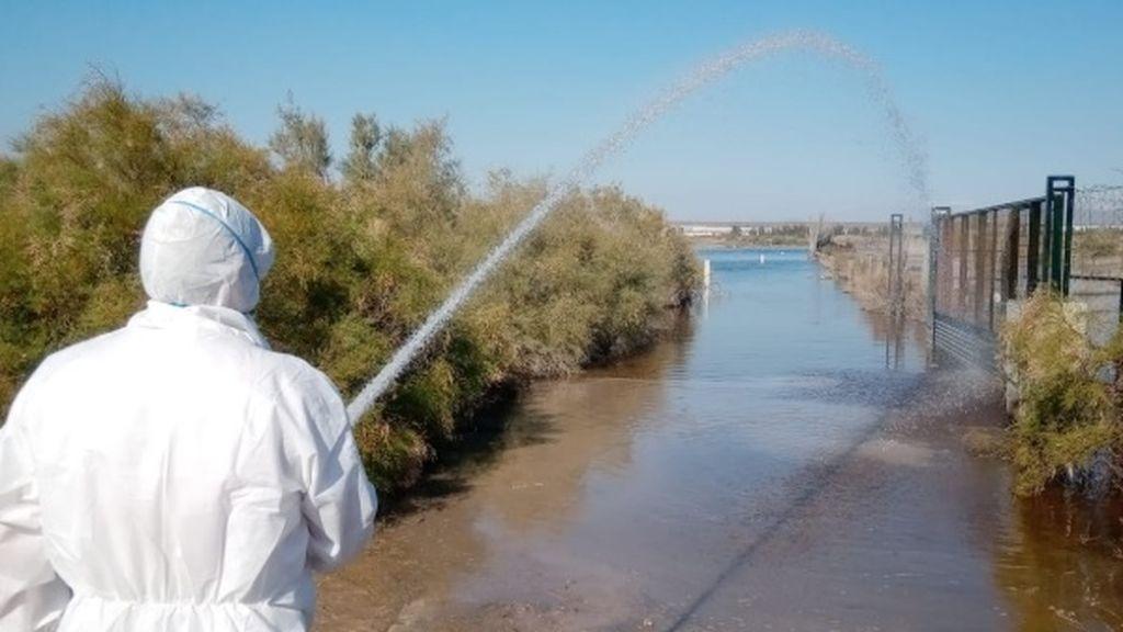 El Ayuntamiento de Almería contrata de urgencia una empresa para acabar con las plagas de la gota fría