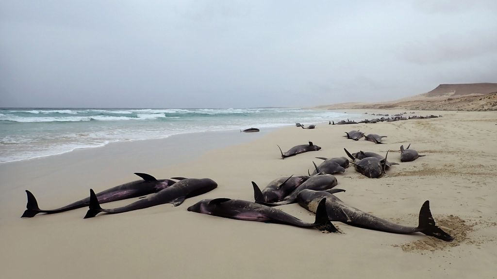 El misterio de los delfines muertos en Cabo Verde