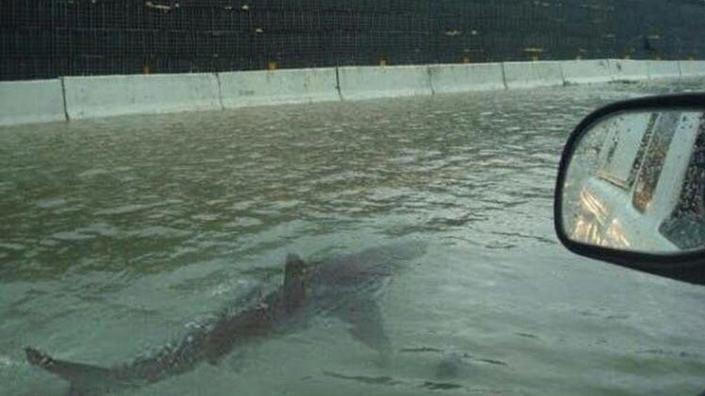 imagen falsa de un tiburón