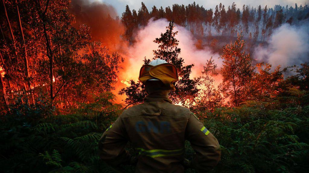 Posible solución anti-incendios: un gel que retarda la propagación del fuego